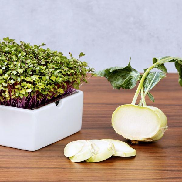 Kohlrabi Saatpads für Microgreens 30 g