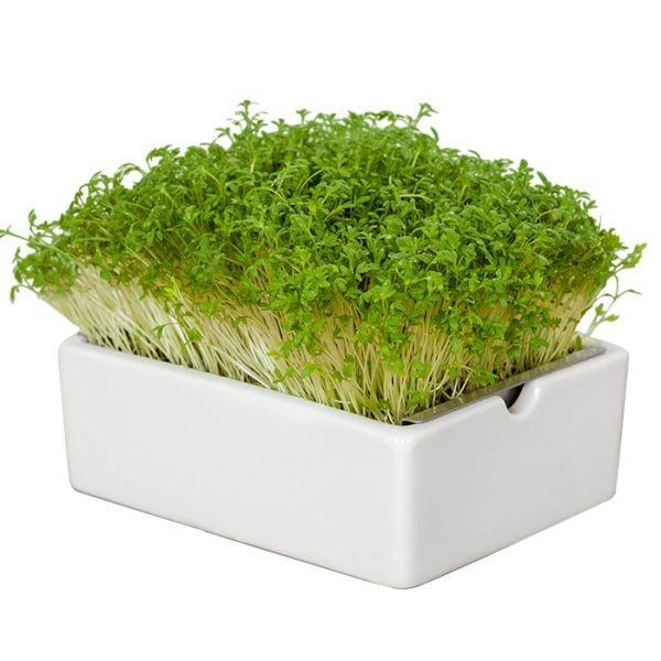Gartenkresse Saatpads für Microgreens 30 g