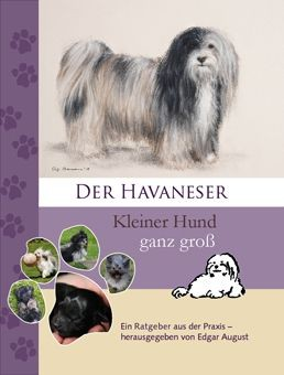 Havaneser - kleiner Hund ganz groß