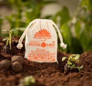 Samenbomben Italienischer Garten 8 Stück
